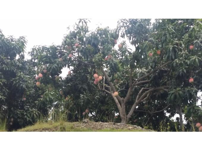 Preciosa Finca  Agro-ecológica con Villa en  San Cristóbal